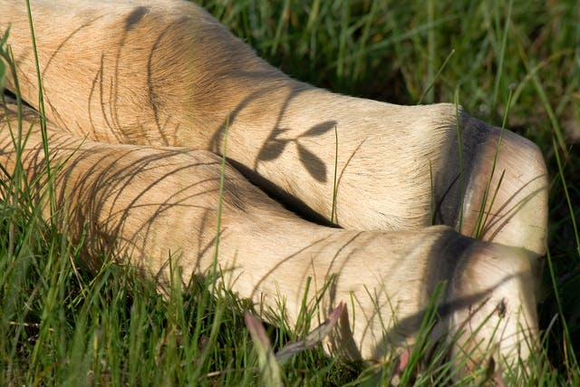 Fractures of the Distal Tarsal Bones in Horses - Symptoms, Causes, Diagnosis, Treatment, Recovery, Management, Cost