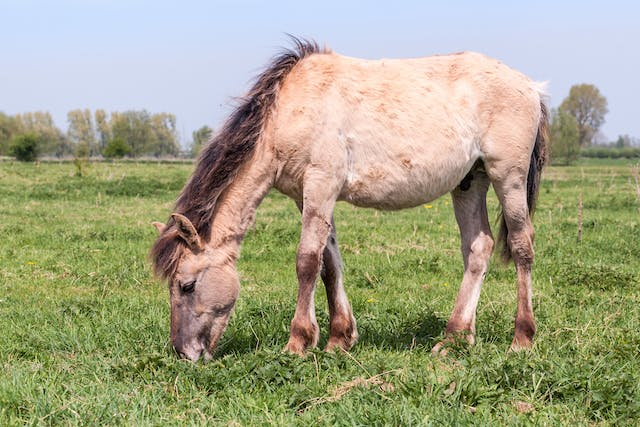 Fungal Infections (Mycoses) in Horses - Symptoms, Causes, Diagnosis, Treatment, Recovery, Management, Cost