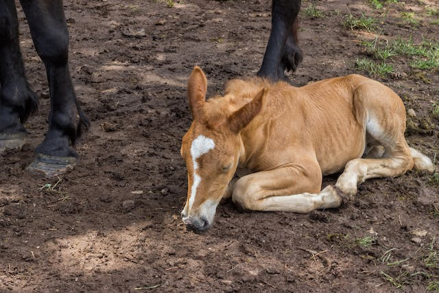 Fusing Joints in Horses - Symptoms, Causes, Diagnosis, Treatment, Recovery, Management, Cost