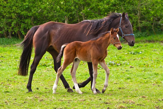 Heart Murmurs in Horses - Symptoms, Causes, Diagnosis, Treatment, Recovery, Management, Cost