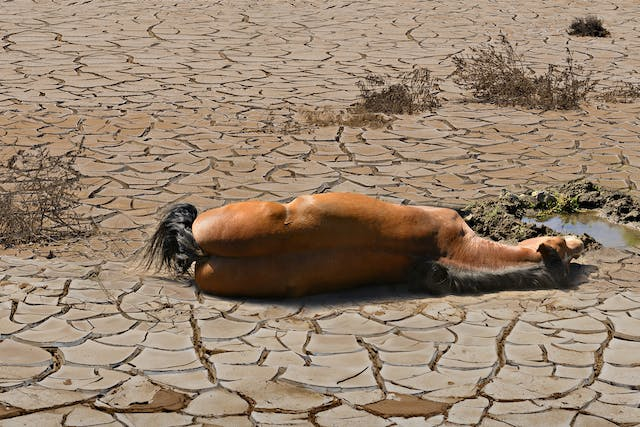 Heat Stress in Horses - Symptoms, Causes, Diagnosis, Treatment, Recovery, Management, Cost