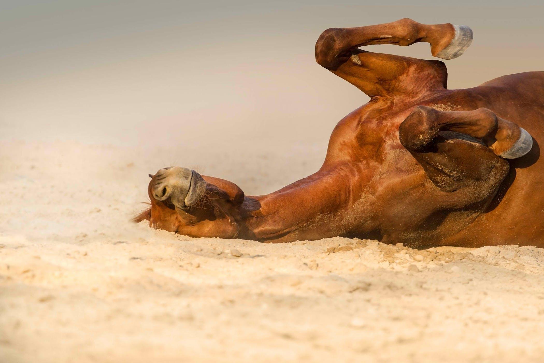 Heat Stroke in Horses - Symptoms, Causes, Diagnosis