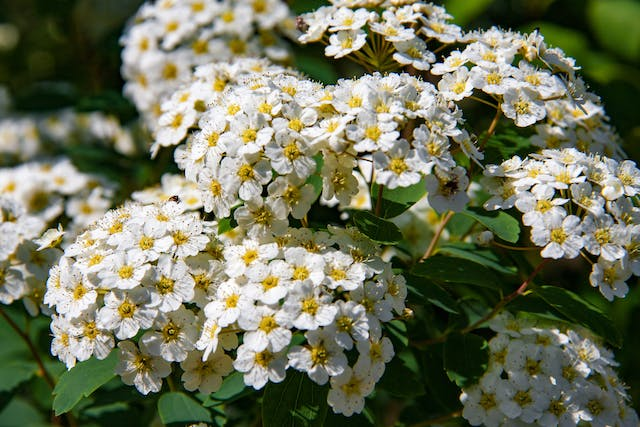 Hemlock Poisoning in Horses - Symptoms, Causes, Diagnosis, Treatment, Recovery, Management, Cost