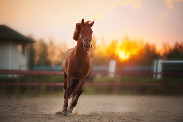 Herpesvirus in Horses - Symptoms, Causes, Diagnosis, Treatment, Recovery, Management, Cost