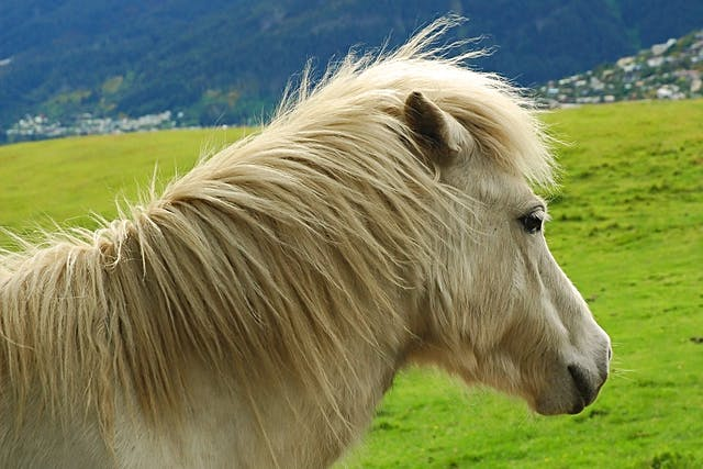 Hypercalcemia in Horses - Symptoms, Causes, Diagnosis, Treatment, Recovery, Management, Cost