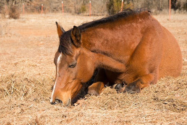 Hypothermia in Horses - Symptoms, Causes, Diagnosis, Treatment, Recovery, Management, Cost