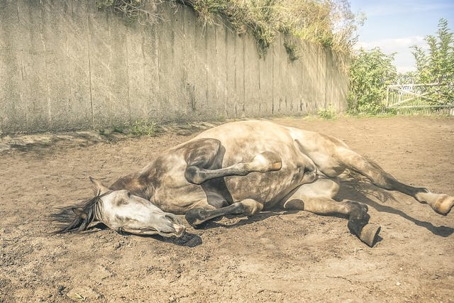 Immune-Deficiency Diseases in Horses - Symptoms, Causes, Diagnosis, Treatment, Recovery, Management, Cost
