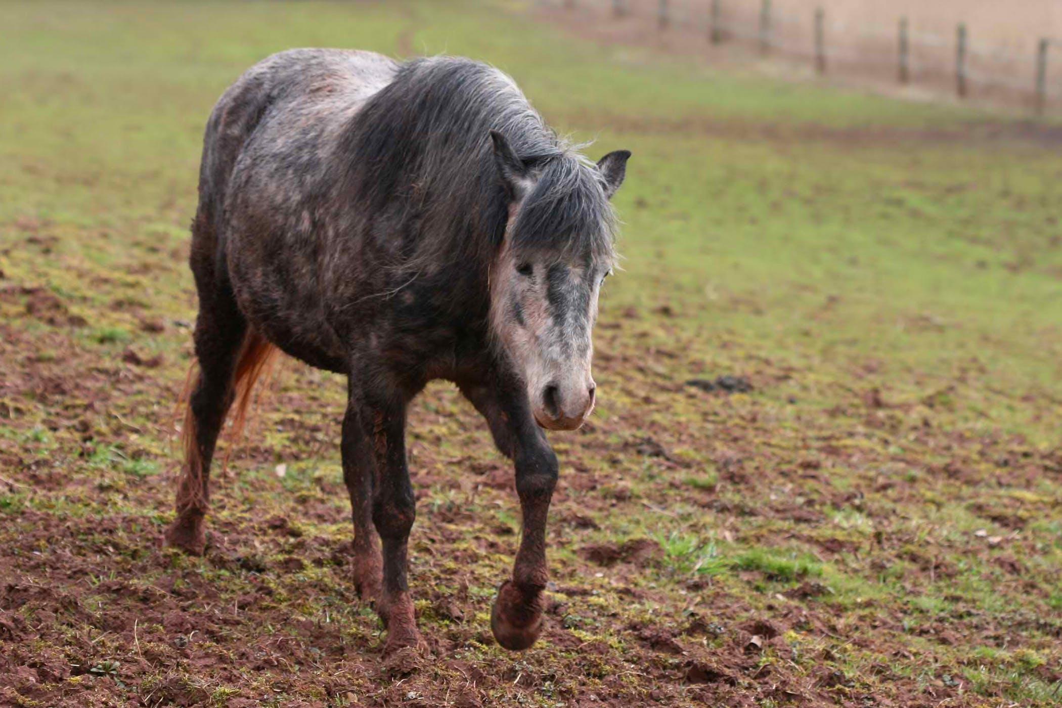 Equine Flu: Symptoms, Causes, Diagnosis
