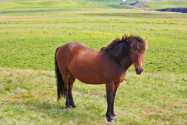 Internal Parasites in Horses - Symptoms, Causes, Diagnosis, Treatment, Recovery, Management, Cost