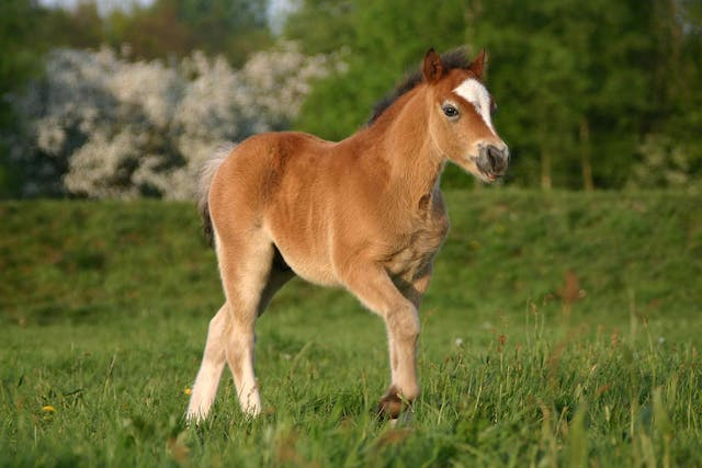 Intestinal Bacterial Infections in Horses - Symptoms, Causes, Diagnosis, Treatment, Recovery, Management, Cost