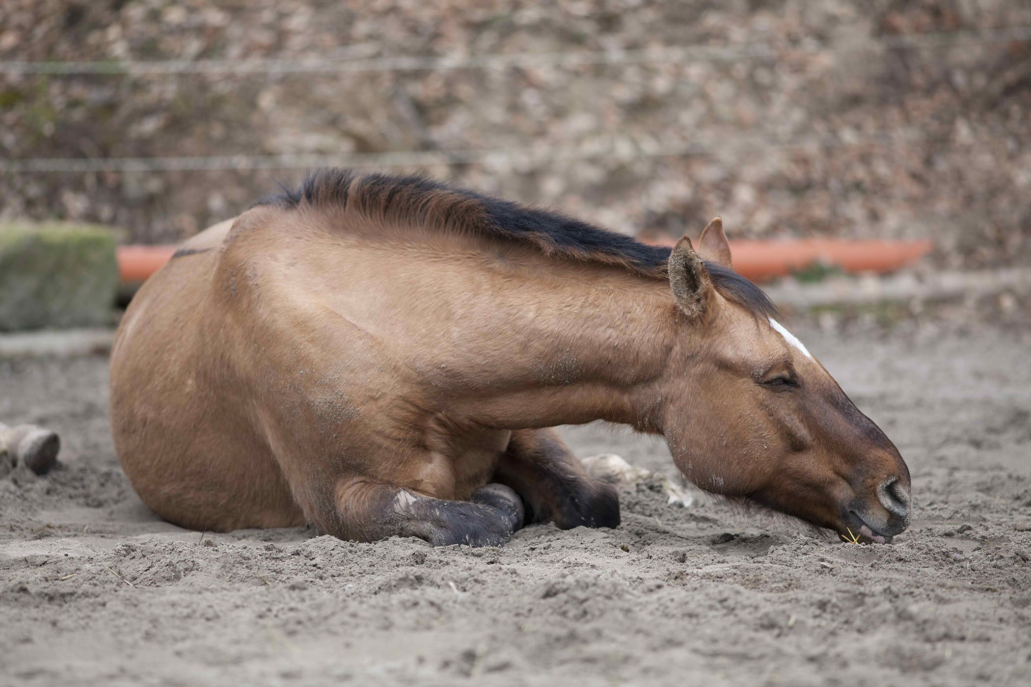 Joint Ill In Horses Symptoms Causes Diagnosis