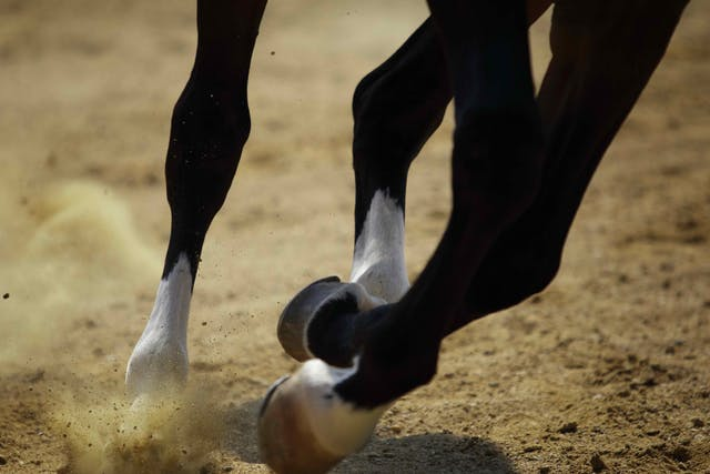 Knock Knees in Horses - Symptoms, Causes, Diagnosis, Treatment, Recovery, Management, Cost