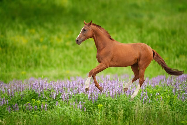 Lampas in Horses - Symptoms, Causes, Diagnosis, Treatment, Recovery, Management, Cost