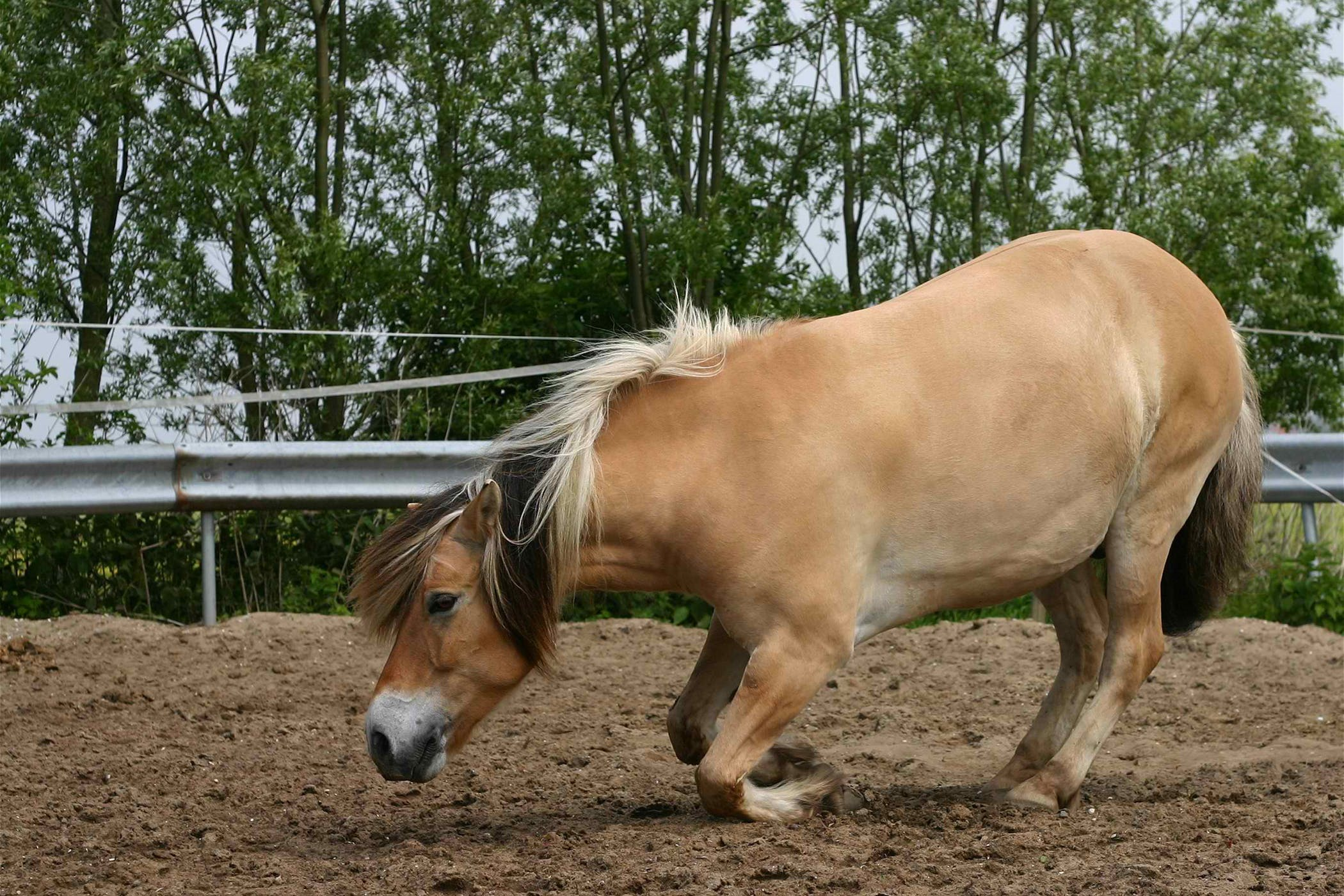 Locking of the Stifle in Horses - Symptoms, Causes, Diagnosis ...