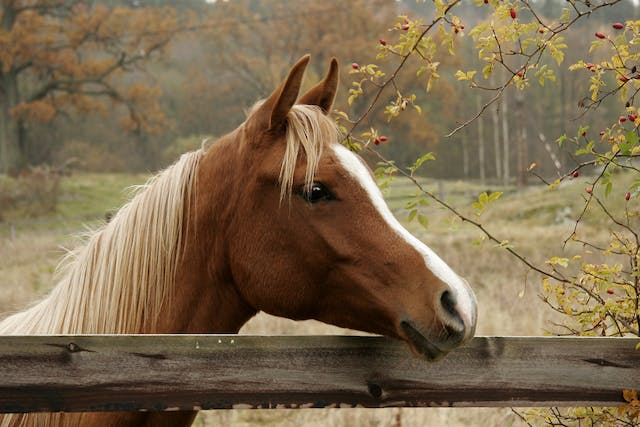 Lyme Disease (Lyme Borreliosis) in Horses - Symptoms, Causes, Diagnosis, Treatment, Recovery, Management, Cost