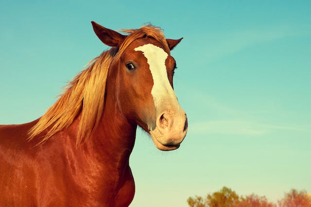 Mosquito-Borne Diseases in Horses - Symptoms, Causes, Diagnosis, Treatment, Recovery, Management, Cost
