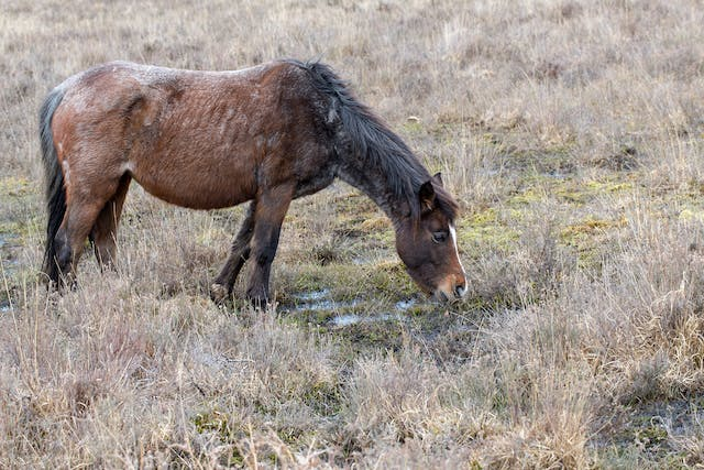 Mud Fever in Horses - Symptoms, Causes, Diagnosis, Treatment, Recovery, Management, Cost
