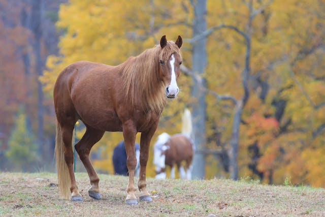 Neospora Hughesi in Horses - Symptoms, Causes, Diagnosis, Treatment, Recovery, Management, Cost