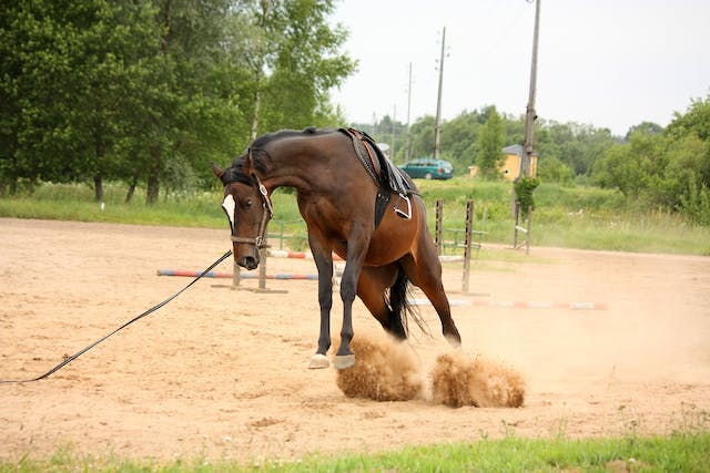 Neurological Virus in Horses - Symptoms, Causes, Diagnosis, Treatment, Recovery, Management, Cost