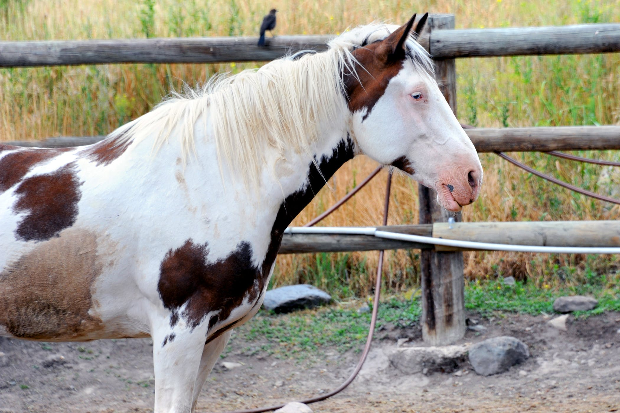 nitrate and nitrite poisoning in horses symptoms causes