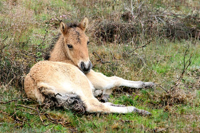 NSAID Toxicosis in Horses - Symptoms, Causes, Diagnosis, Treatment, Recovery, Management, Cost