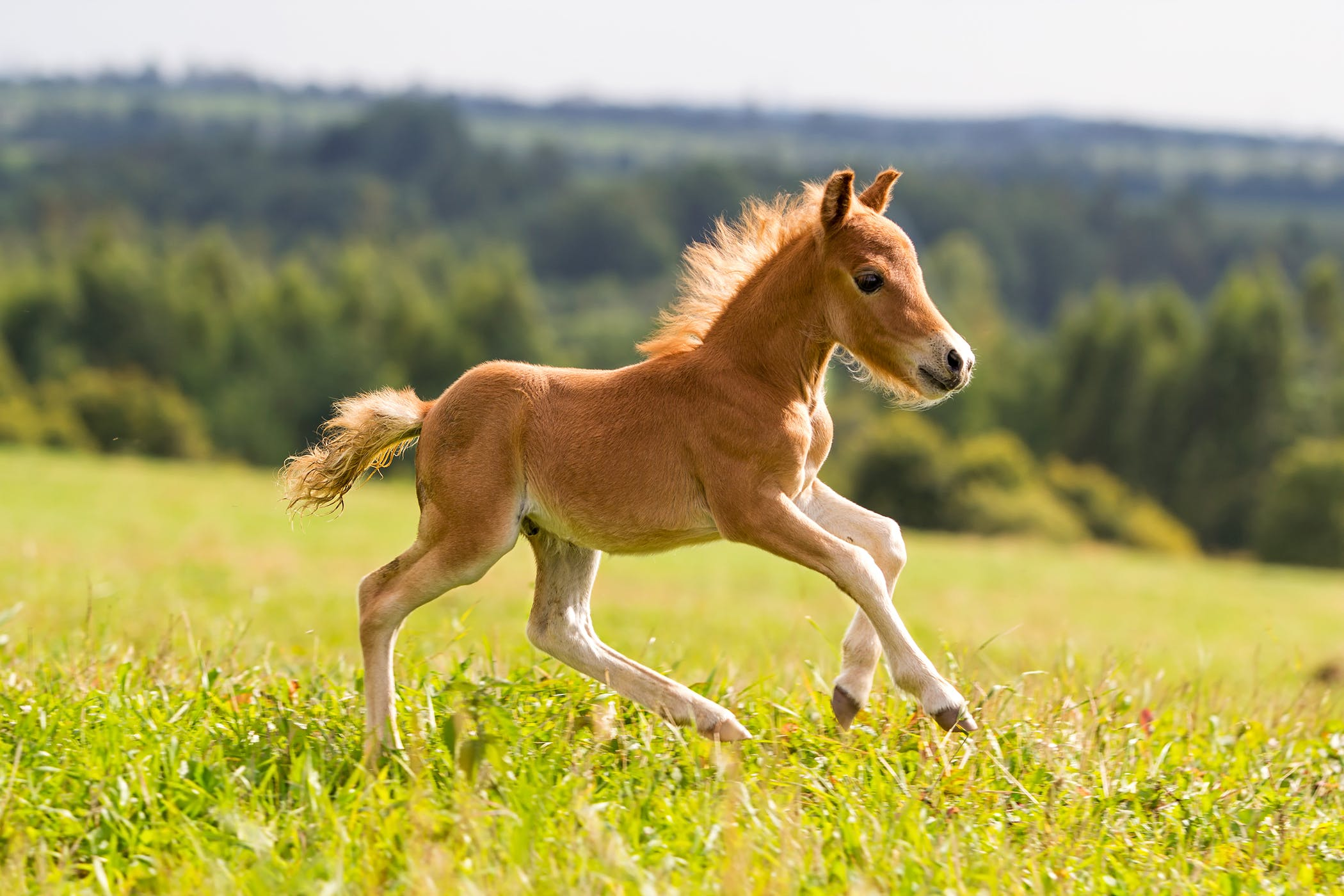 orphan foal in horses symptoms causes diagnosis treatment