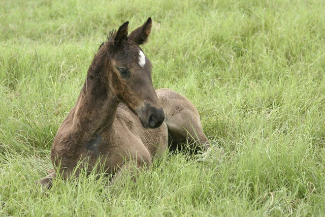 Osteoarthritis in Horses - Symptoms, Causes, Diagnosis, Treatment, Recovery, Management, Cost