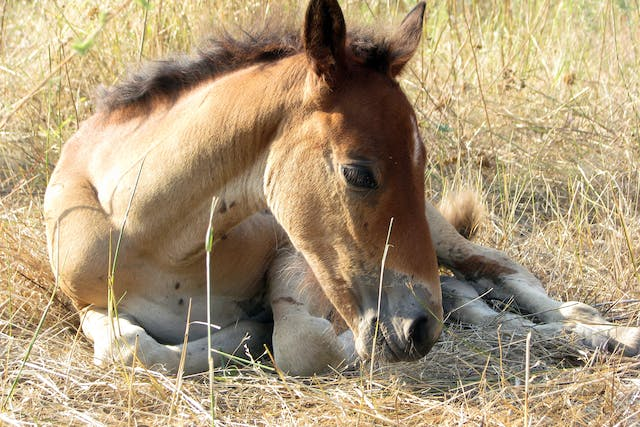 Osteochondrosis of the Stifle in Horses - Symptoms, Causes, Diagnosis, Treatment, Recovery, Management, Cost