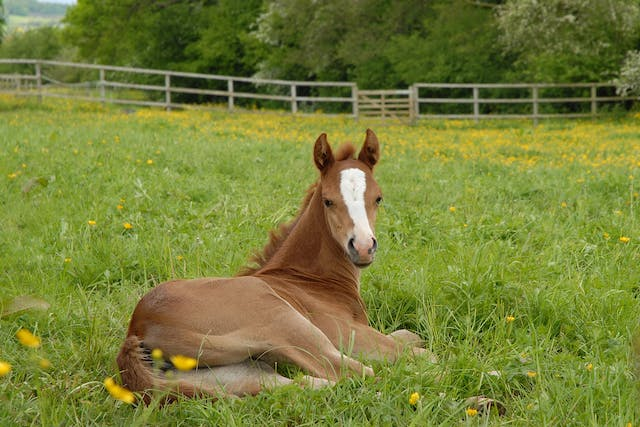 Osteochondrosis in Horses - Symptoms, Causes, Diagnosis, Treatment, Recovery, Management, Cost