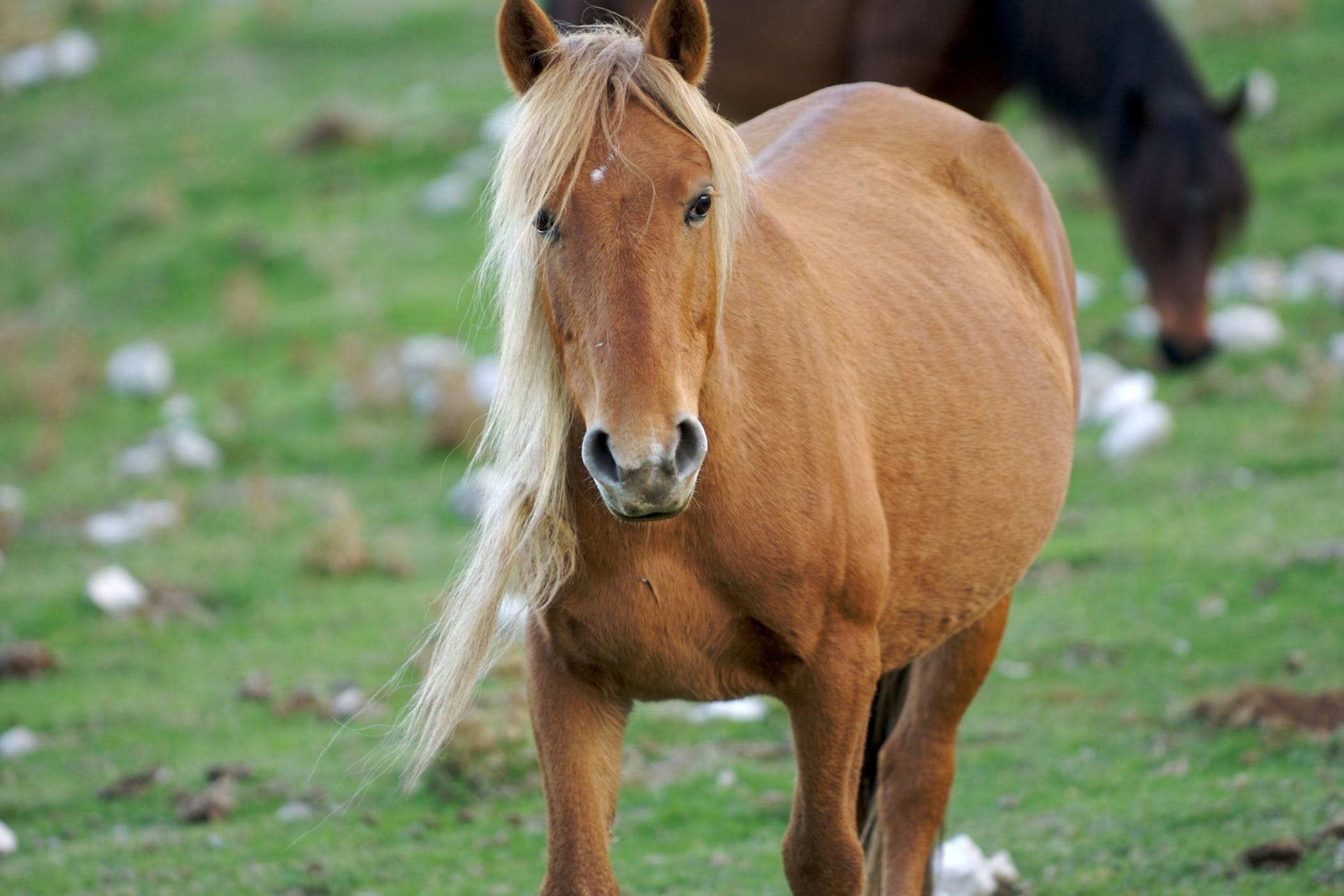 Ovarian Cancer (Mares) in Horses - Symptoms, Causes, Diagnosis