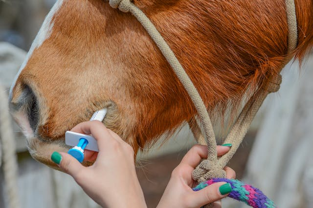 Penicillin Allergy in Horses - Symptoms, Causes, Diagnosis, Treatment, Recovery, Management, Cost