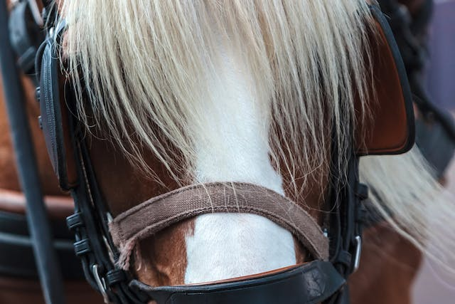 Photosensitization in Horses - Symptoms, Causes, Diagnosis, Treatment, Recovery, Management, Cost