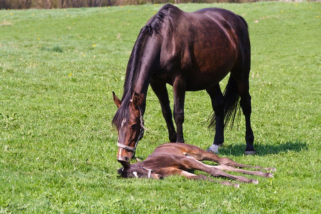 Proliferative Enteropathy (Foals) in Horses - Symptoms, Causes, Diagnosis, Treatment, Recovery, Management, Cost
