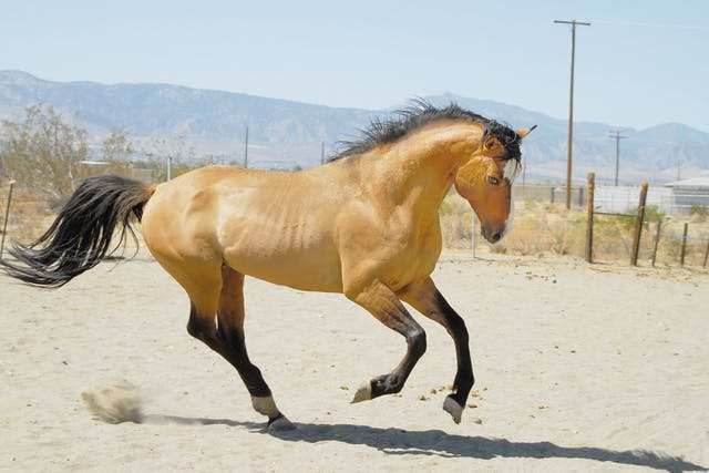 Rattles in Horses - Symptoms, Causes, Diagnosis, Treatment, Recovery, Management, Cost