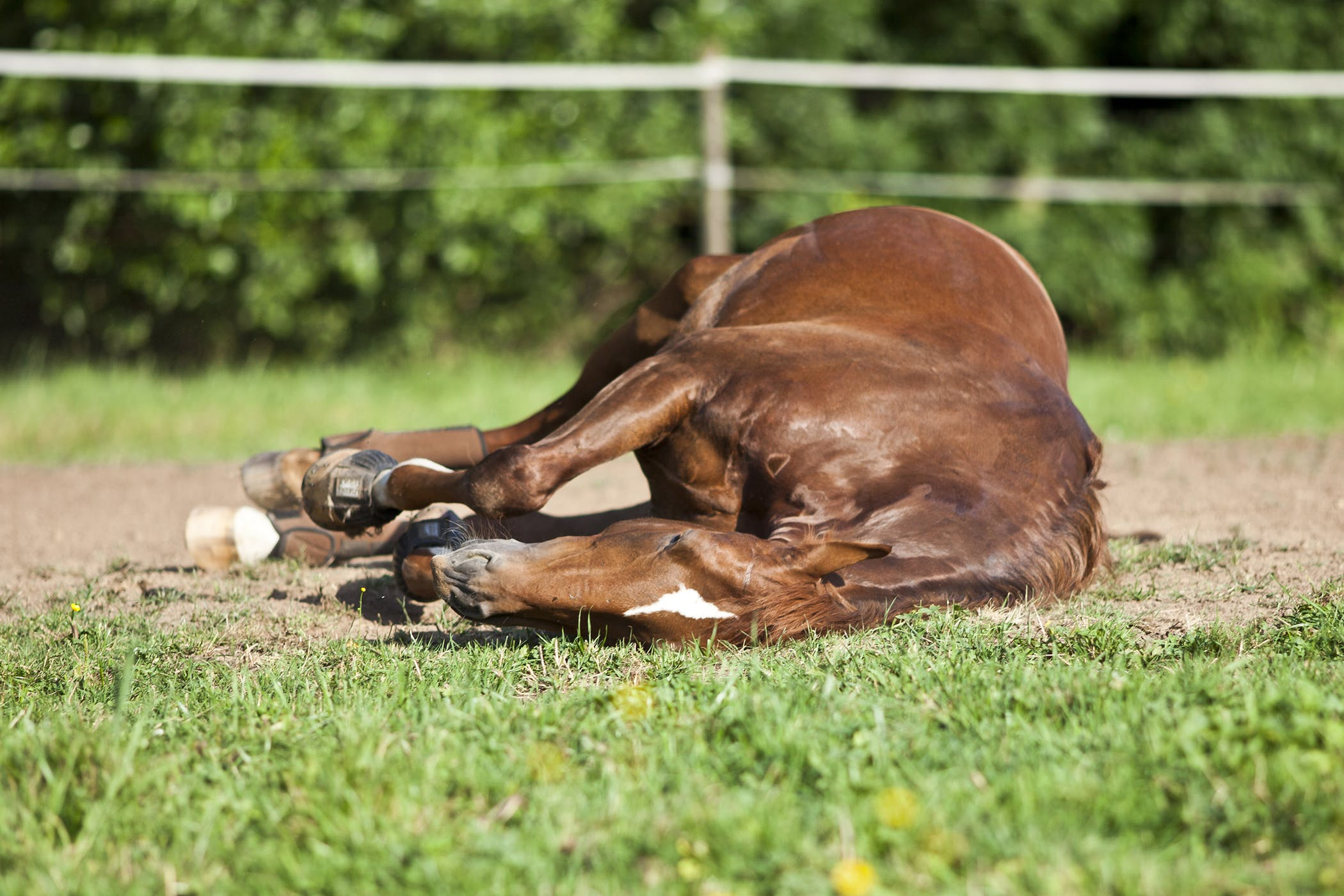 Retained Placenta in Horses - Symptoms, Causes, Diagnosis