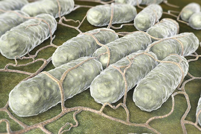 Salmonella in Horses - Symptoms, Causes, Diagnosis, Treatment, Recovery, Management, Cost