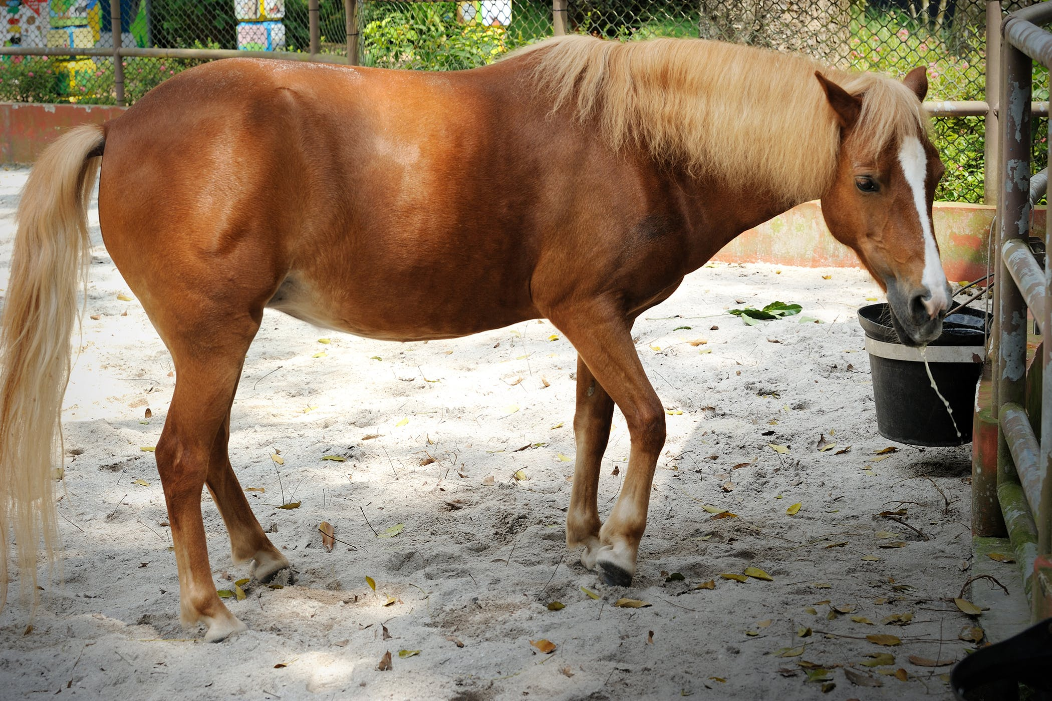 Sand Colic in Horses - Symptoms, Causes, Diagnosis