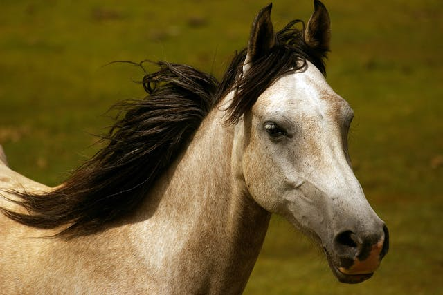 Seasonal Influences (Dietary Needs) in Horses - Symptoms, Causes, Diagnosis, Treatment, Recovery, Management, Cost