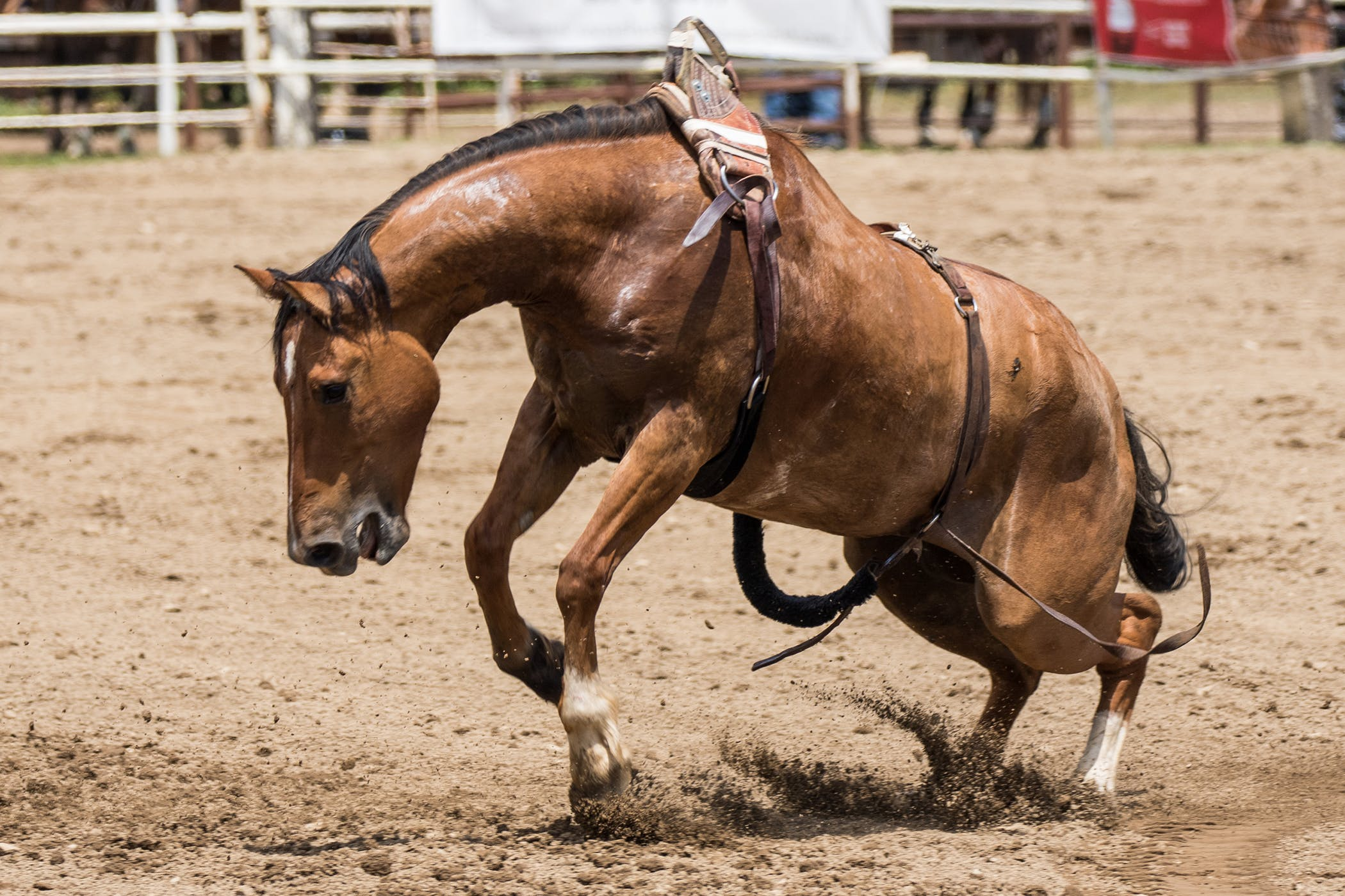 Separation Anxiety in Horses - Symptoms, Causes, Diagnosis
