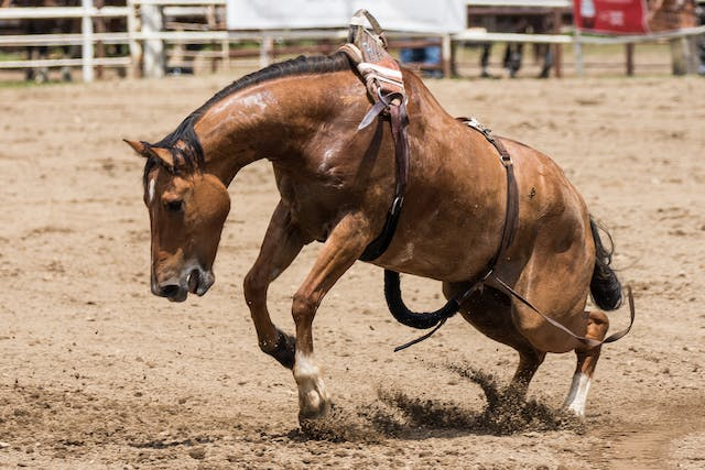 Separation Anxiety in Horses - Symptoms, Causes, Diagnosis, Treatment, Recovery, Management, Cost