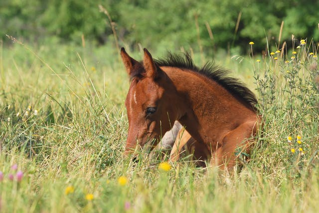 Shampoo Allergy in Horses - Symptoms, Causes, Diagnosis, Treatment, Recovery, Management, Cost