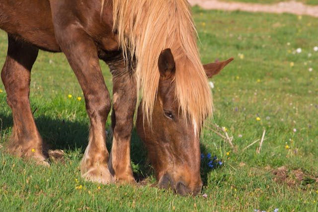 Shin Soreness in Horses - Symptoms, Causes, Diagnosis, Treatment, Recovery, Management, Cost