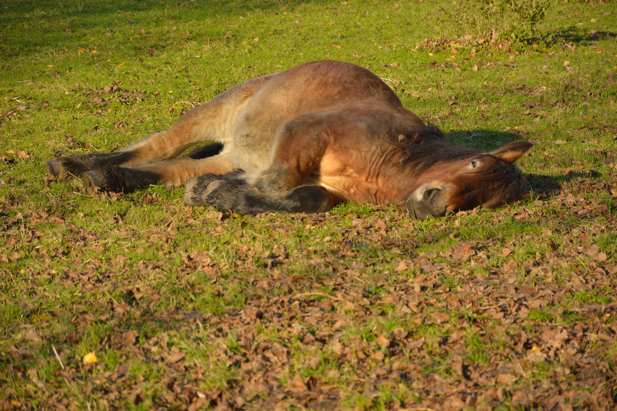 Shipping Fever in Horses - Symptoms, Causes, Diagnosis
