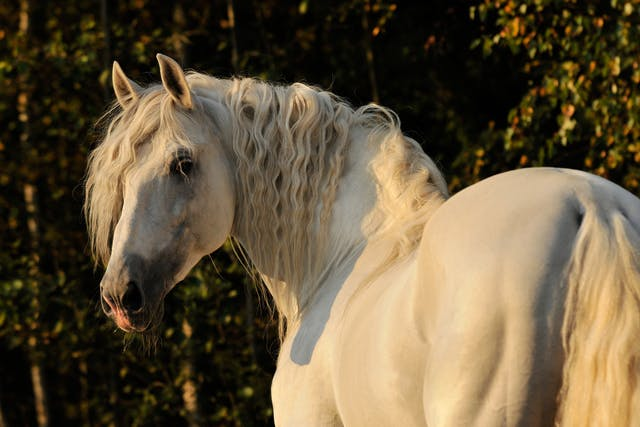 Small Strongyles in Horses - Symptoms, Causes, Diagnosis, Treatment, Recovery, Management, Cost