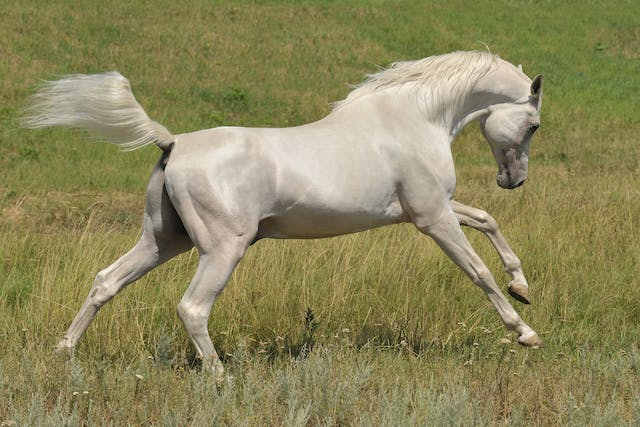 Striking in Horses - Symptoms, Causes, Diagnosis, Treatment, Recovery, Management, Cost