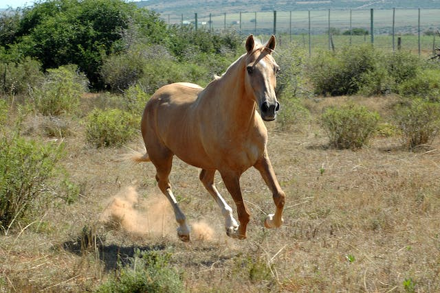 Summer Sores in Horses - Symptoms, Causes, Diagnosis, Treatment, Recovery, Management, Cost