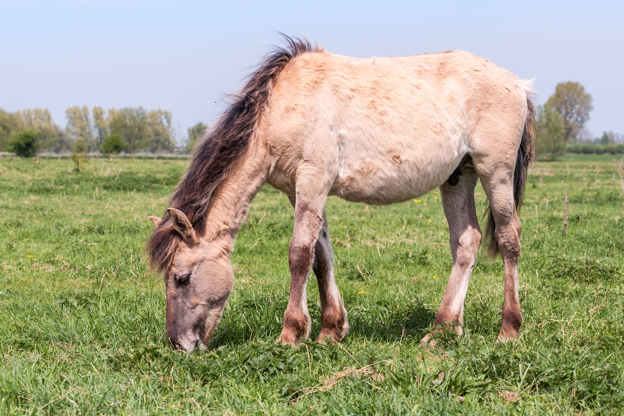 Sunburn in Horses - Symptoms, Causes, Diagnosis, Treatment, Recovery