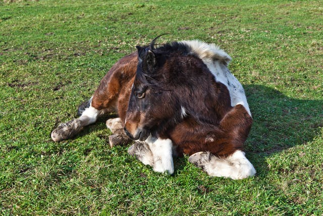 Swamp Fever in Horses - Symptoms, Causes, Diagnosis, Treatment, Recovery, Management, Cost
