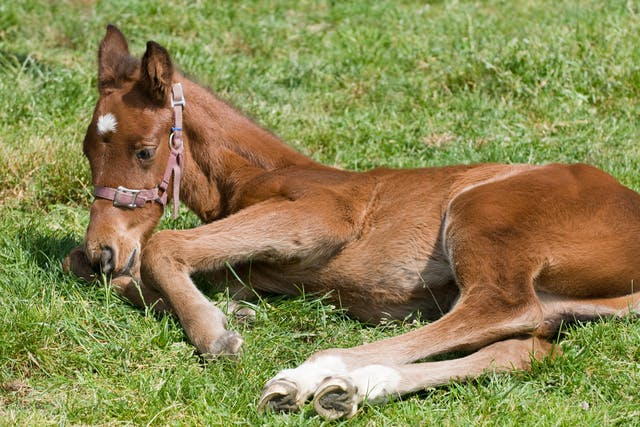 Theiler's Disease in Horses - Symptoms, Causes, Diagnosis, Treatment, Recovery, Management, Cost