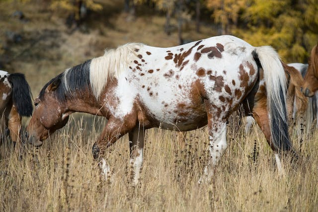 Tick Allergy in Horses - Symptoms, Causes, Diagnosis, Treatment, Recovery, Management, Cost